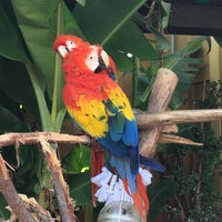 Photo taken at Macaws by Nick F. on 4/29/2016