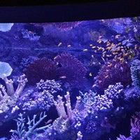 Foto diambil di Antalya Aquarium oleh Şebnem Ü. pada 1/27/2013