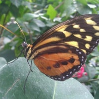 Photo taken at Butterfly Pavilion by Melissa T. on 11/17/2011