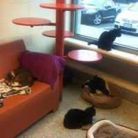 Photo taken at MSPCA Adoption Center by Christina B. on 7/26/2012