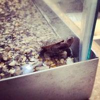 Photo taken at Mass Audubon Wellfleet Bay Wildlife Sanctuary by Emily W. on 9/3/2012