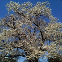 Photo taken at 桜樹広場 by chidoringo on 4/8/2012