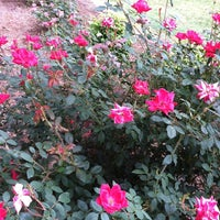 Photo taken at Pam's Knock Out Rose Garden by Pam H. on 9/20/2011