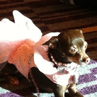 Photo taken at BarkWorld Expo 2011 by Tanya F. on 10/1/2011