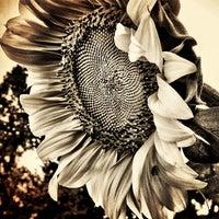 Photo taken at Patterson City Farms Garden by David L. on 6/27/2012