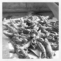 Photo taken at The Million Years Stone Park & Pattaya Crocodile Farm by Рома ч. on 4/5/2012