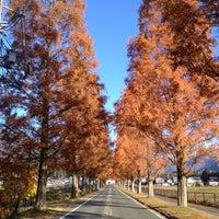 Photo taken at メタセコイア並木道 by momo on 12/2/2012