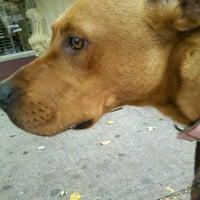 Photo taken at Montclair Township Animal Shelter by robert g. on 10/28/2012