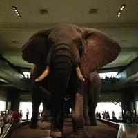 Foto tirada no(a) Museu Americano de História Natural por Viraj M. em 6/26/2013