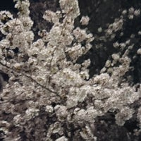 Photo taken at 桜樹広場 by 長井 6. on 3/28/2018