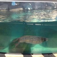 Virginia Aquarium & Marine Science Center - Oceanfront ...