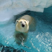 Photo taken at Ueno Zoo by Juntaro Y. on 11/6/2012