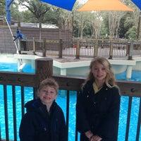 12/27/2012 tarihinde Kimberly H.ziyaretçi tarafından California Sea Lions Pool'de çekilen fotoğraf