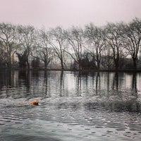 3/12/2013 tarihinde MaSovaida M.ziyaretçi tarafından Hampstead Heath Ponds'de çekilen fotoğraf