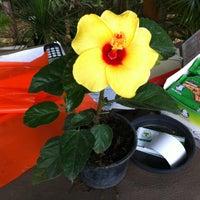 Photo taken at Serra Verde Plantas by Carolina A. on 11/3/2012