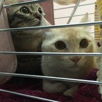Photo taken at Krongthong Animal Hospital by PANGJiiii W. on 3/29/2014