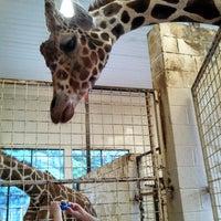 Photo taken at Erie Zoo by Sveen Þorskur 바이트 aus Schwelm on 6/22/2013