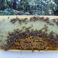 Photo taken at Kiwimana Beekeeping and Gardening Shop by Gary F. on 3/12/2013