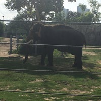 Photo taken at African Forest @ Houston Zoo by Jennifer H. on 7/2/2017