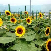 Das Foto wurde bei Sunflower Garden von Jeffzilla am 4/9/2013 aufgenommen