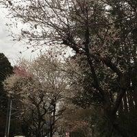 Photo taken at 相模原中央緑地 by ☆pika on 3/16/2018