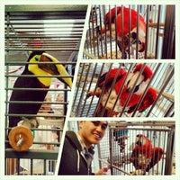 Снимок сделан в Andy's Pet Shop пользователем Sasha B. 11/17/2012