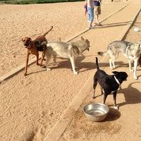 Foto scattata a Stapleton Dog Park da Mike W. il 5/24/2013
