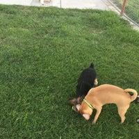 Das Foto wurde bei Centennial Hills Dog Park von maria s. am 8/10/2016 aufgenommen