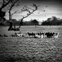 Photo taken at Phoenix Park Castleknock Gate by Luca N. on 12/25/2012