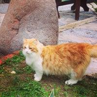 Photo taken at Çamyuva Rustik by Kaan K. on 1/19/2014