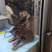 Photo taken at Qian Hu Pet Shop by attakon s. on 9/10/2014