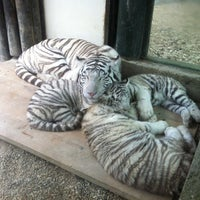 Photo taken at ZOO Liberec by Kristýna B. on 11/24/2012