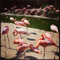 Photo taken at Flamingo Exhibit by David B. on 6/1/2013