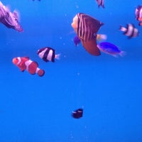 Photo taken at lucky ocean aquarium by Sarah S. on 5/11/2013