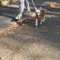 Photo taken at 靭公園犬のお散歩 by koryu m. on 11/4/2017