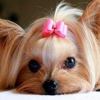 Photo taken at www.dog-star.com.ua by Денис В. on 11/9/2014