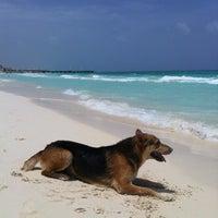 Photo taken at Playa Xaman-Ha by Leandro M. on 6/8/2013