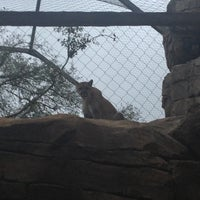 Photo taken at African Forest @ Houston Zoo by Patricia T. on 1/12/2013