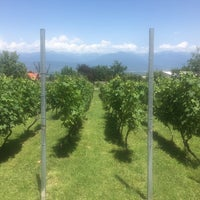 Photo taken at Chateau Schuchmann Wines by Olya F. on 7/16/2017