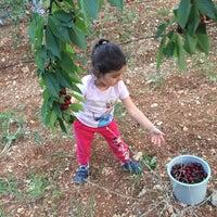Photo taken at ACIYER BAĞ EVİ by TÜLİN E. on 6/16/2015
