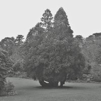 Photo taken at Trelissick Gardens by Mike M. on 12/27/2012
