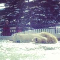 Photo taken at Polar Bear Museum by gentleman l. on 2/12/2013