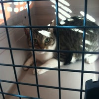Photo taken at The Cat Doctor by Katie C. on 11/15/2014