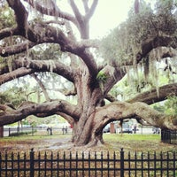 Photo taken at Safety Harbor Big Tree by Juniper E. on 1/2/2013