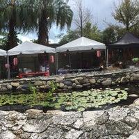 Photo taken at Ichimura Miami Japanese Garden by Edward V. on 1/10/2016