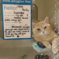 Photo taken at Petco by Alison L. on 5/25/2014