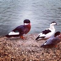 Photo taken at Addison Les Lacs Duck Pond by Elysa E. on 3/1/2014