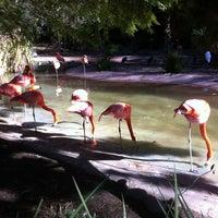 Photo taken at Flamingo Exhibit by John K. on 1/2/2013
