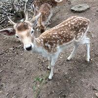 5/2/2017 tarihinde Dilek A.ziyaretçi tarafından Piknik Park Polonezköy Petting Zoo'de çekilen fotoğraf