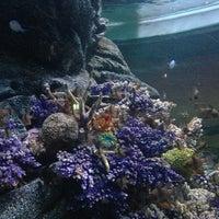 Photo taken at SEA LIFE Bangkok Ocean World by Jay B. on 6/5/2013